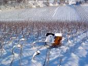 Elle sert à brûler les sarments de vigne coupés à la taille ... et aussi de chauffage à nous, vignerons !